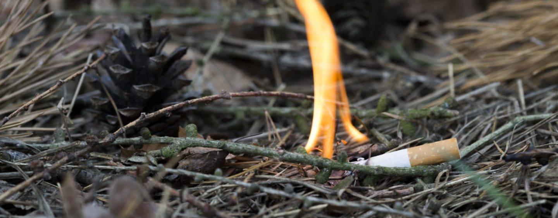 Waldbrandgefahr: Stadt kann Unterlassung der Veranstaltung fordern