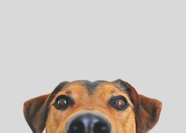 Corona-Spürhunde im Einsatz auf Großveranstaltungen